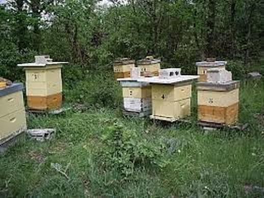 colmenar - Entrenamiento para apicultor 050719 - El Apicultor Español: Actitud y Aptitud Apícola