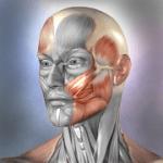 Muscle and Bone Anatomy 3D v1.2.1 APK Paid