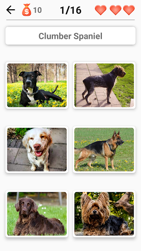 Dog Breeds – Quiz about all dogs of the world 1.98 screenshots 6