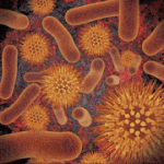 Infectious Disease Compendium V 39.02.01 APK