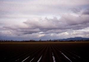 Salinas Valley, winter into spring