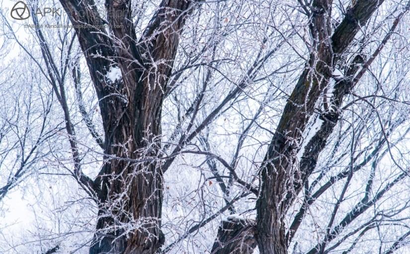 Winter frost, Saskatchewan
