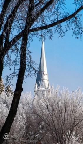Winter frost in the trees of Regina, Saskatchewan