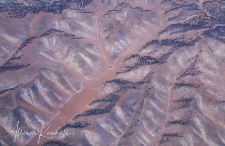 Aerial of burnished copper hills dusted with oak forest, as seen during an extended western drought along the coastal landscape of California