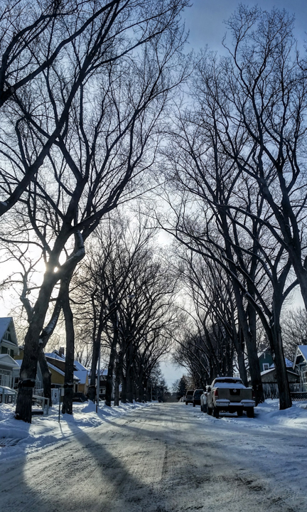 Street lined with tall trees in winter