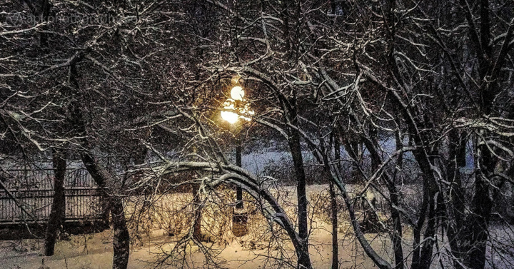 Streetlamp illuminates trees in a park on a cold winter's night