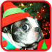 Download sparse kids Animals Christmas 5.22.020 APK For Android