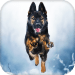 Download German Shepherd Live Wallpaper – backgrounds hd 15.0 APK For Android