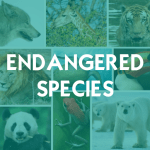Download Endangered Species 1.2.2 APK For Android