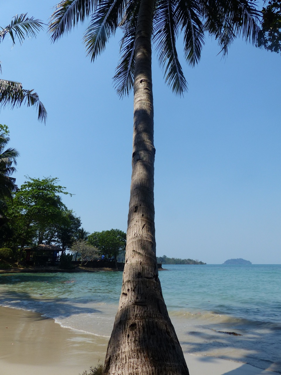 palm-tree-koh-chang
