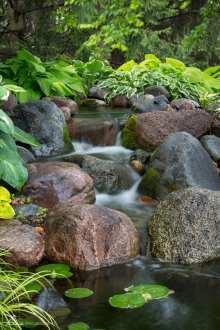 backyard pond example