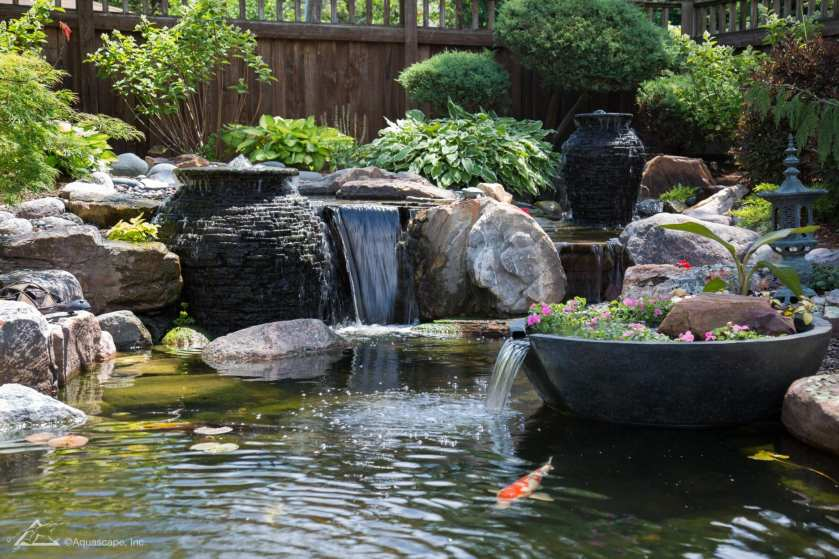 Ecosystem Pond_14