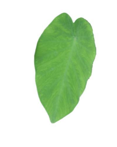 Arbi-leafs