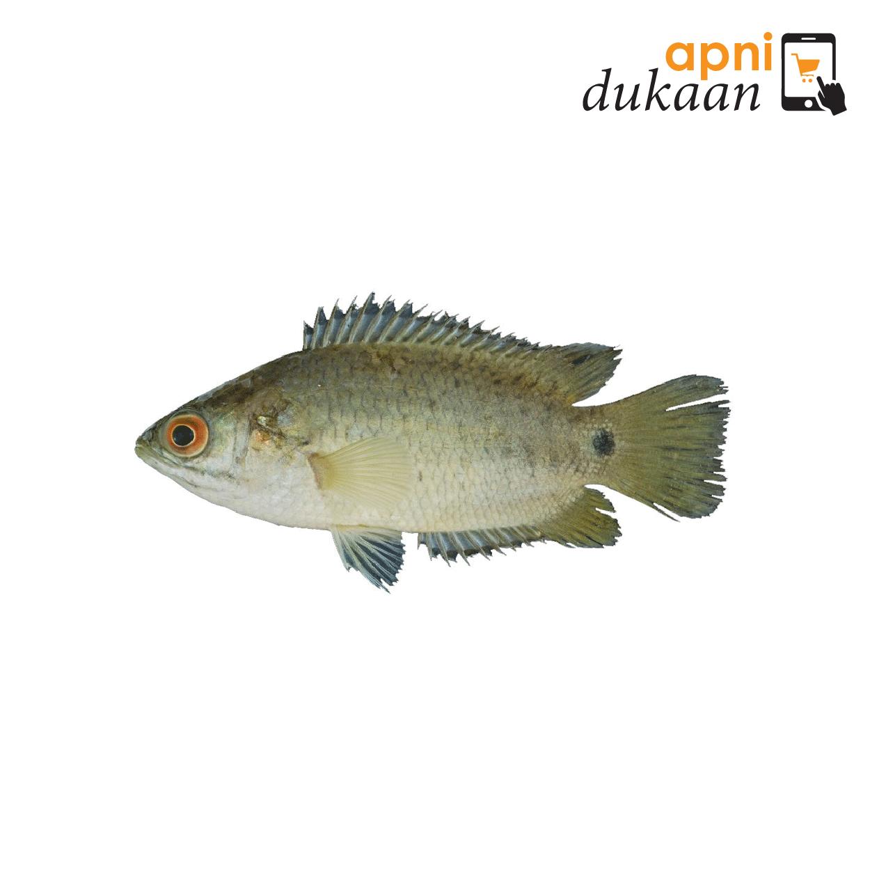 Bangladeshi Koi Fish – 500g