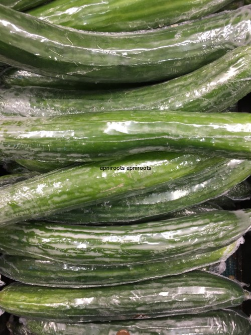 Bg - Cucumber English - 1lb
