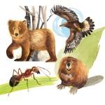 Krafttiere – Ameise, Adler, Bär, Biber
