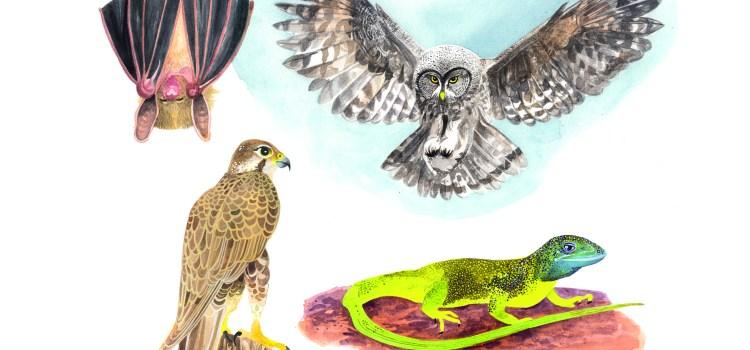 Entdecke dein Krafttier - Adler, Fledermaus, Euele & Eidechse