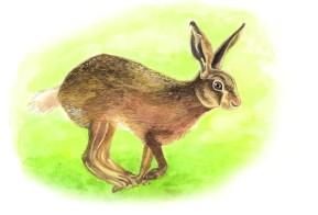 Entdecke dein Krafttier - Hase