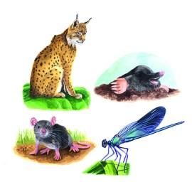 Krafttiere – Luchs, Maulwurf, Maus, Libelle