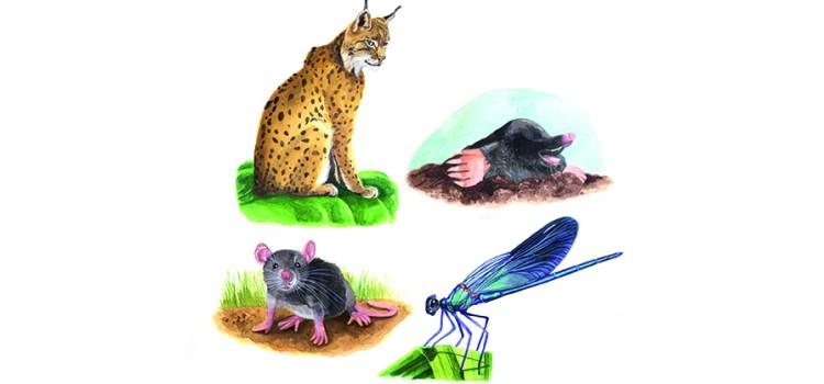 Entdecke dein Krafttier - Maus, Luchs, Libelle und Maulwurf