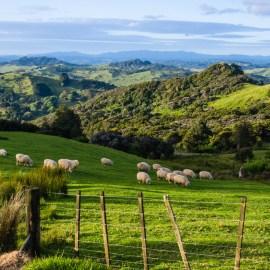 Tohonga: Die Medizinmänner Neuseelands