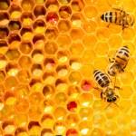 Propolis – Die Bienen und deren Erzeugnisse
