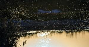 Hilfe bei Insektenstichen - Wasser