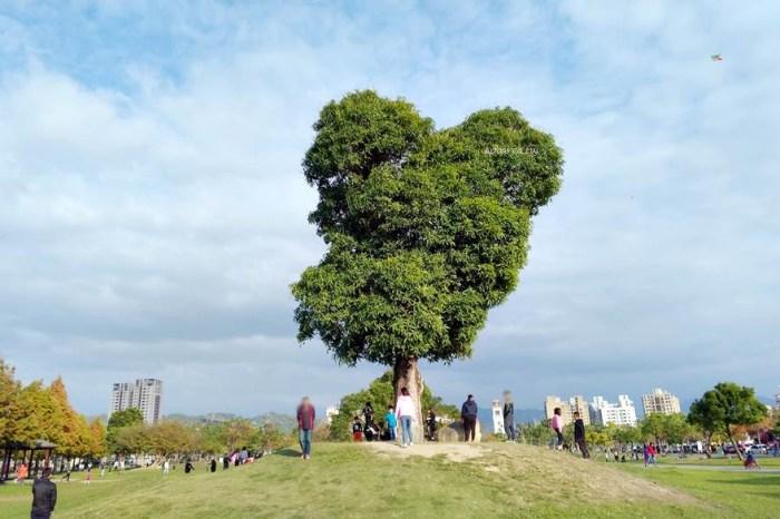 南興公園米奇樹。北屯萬坪親子公園,落羽松大道,台中網紅熱門拍照打卡景點