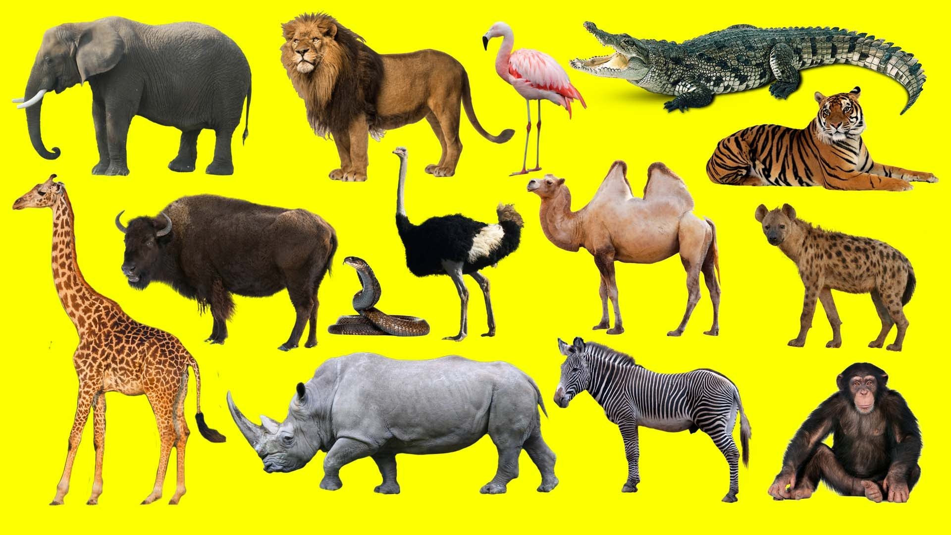 6 Endangered Animals Worksheets