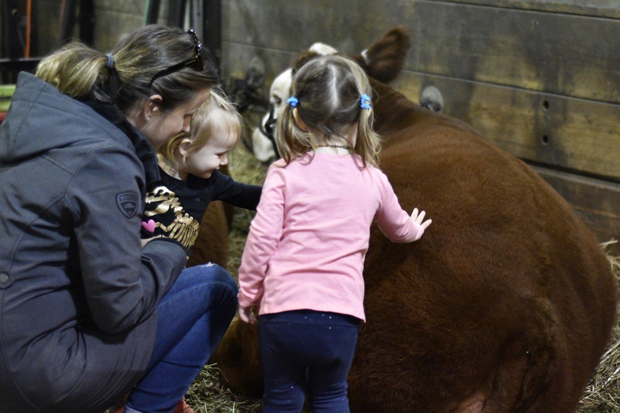 7 Farm Animals Preschool Door