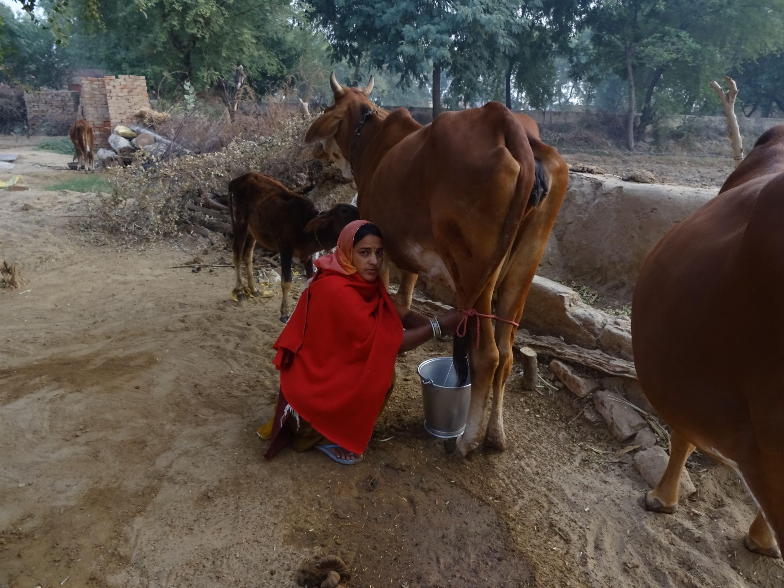 6 Farm Animals Preschool Literacy