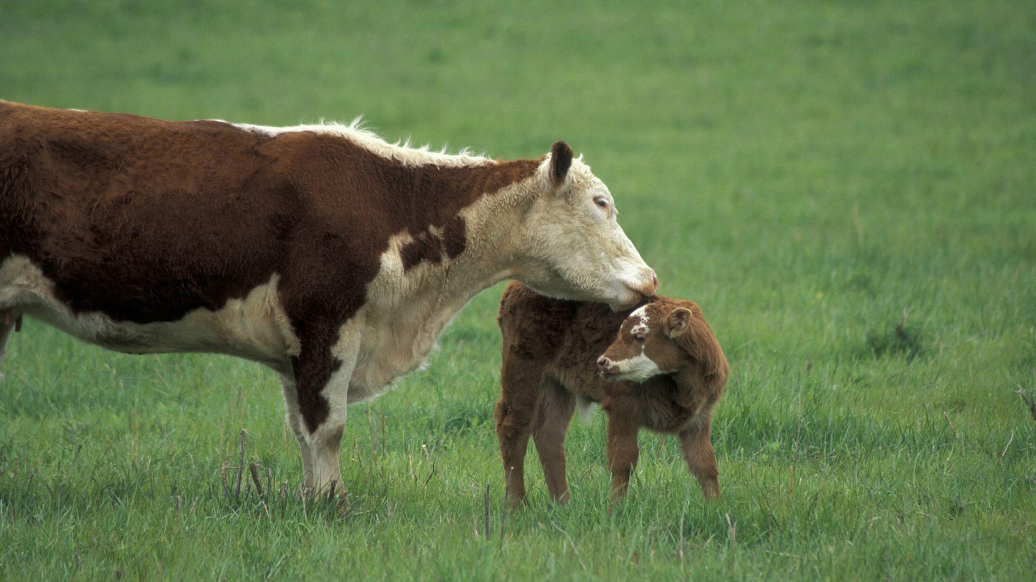 7 Farm Animals Preschool Poem