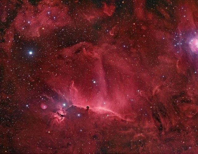 La nebulosa oscura Testa di cavallo