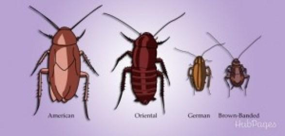 Απολυμανσεις Αγιος Δημήτριος - κατσαρίδες