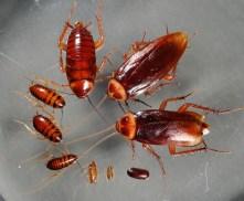 Απολυμανσεις - Βαδιστικά έντομα