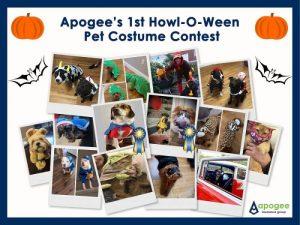 Pet Costume Contest Collage