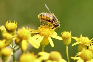 Climate Change Could Worsen Seasonal Allergies