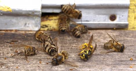 Schuift Europa verbod op 'bijenkillers' voor zich uit ?