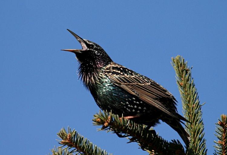 Vögel füttern im Winter?