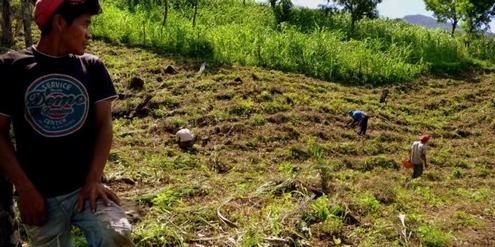 Die Zukunft gehört den Kleinbauern, nicht den Monokulturen (2)