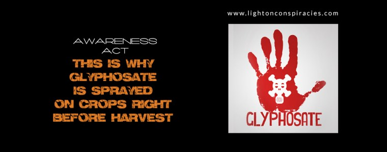 This Is Why Glyphosate Is Sprayed On Crops Right Before Harvest   Light On Conspiracies – Revealing the Agenda