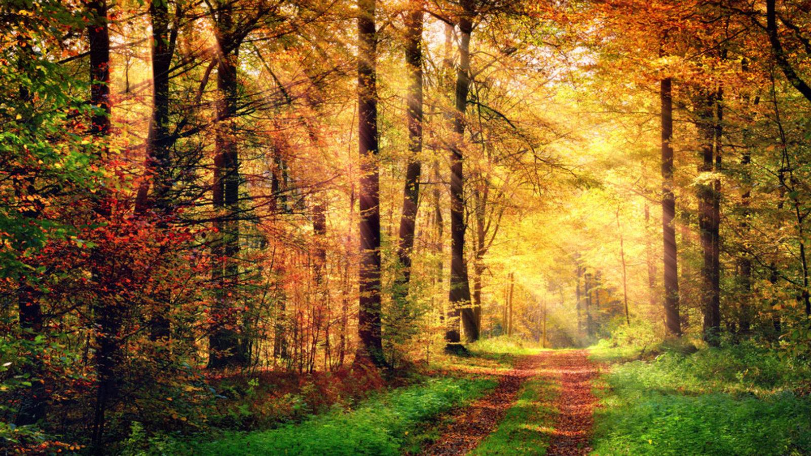 Retten wir den Wald!
