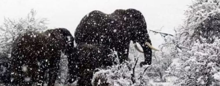Snowing in Africa – Wow   Armstrong Economics