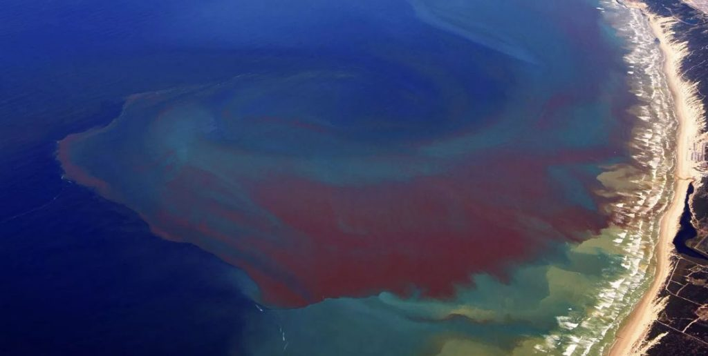 Red Tide & Blaming Farmers & Global Warming Yet it Conforms to Pi | Armstrong Economics