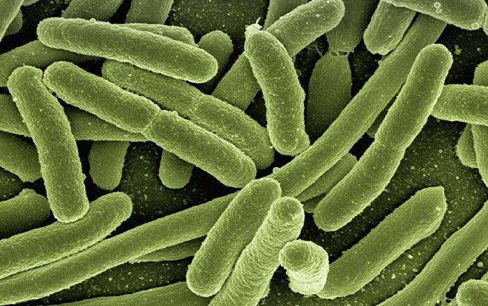 zweites-zuhause-von-darmbakterien-in-unerwartetem-korperteil-entdeckt