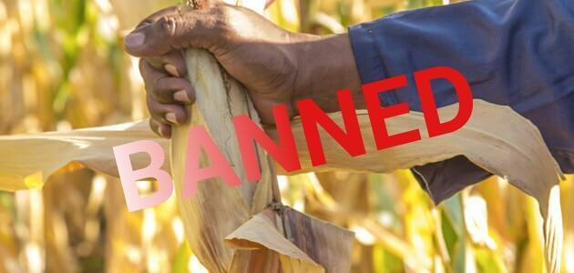 tanzania-orders-destruction-of-monsanto-gates-gm-trials-due-to-illegal-use-for-pro-gm-propaganda-8211-global-research