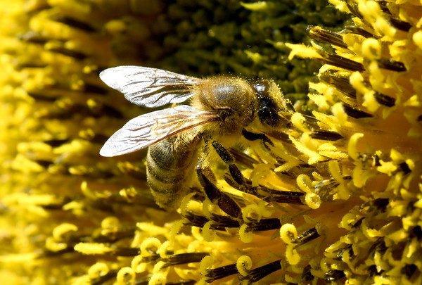 pentagon-will-mit-insekten-ernte-ausfalle-verhindern