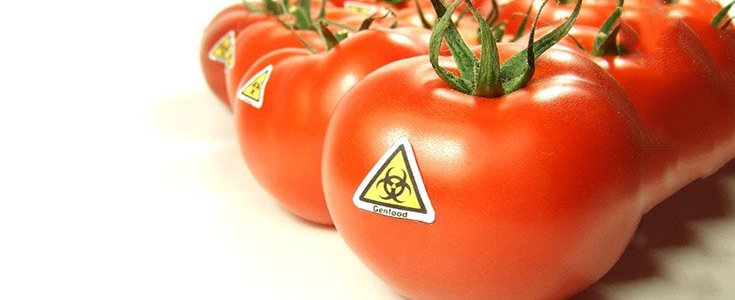 gmos-in-many-foods-will-go-undisclosed-under-trumps-final-gmo-rule-8211-global-research