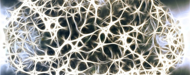 lab-grown-human-mini-brains-on-the-move-hook-up-to-muscle-of-their-own-free-will