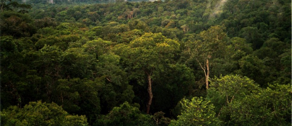 international-coalition-calls-for-the-eu-to-end-its-role-in-the-assault-on-the-amazon-8211-global-research